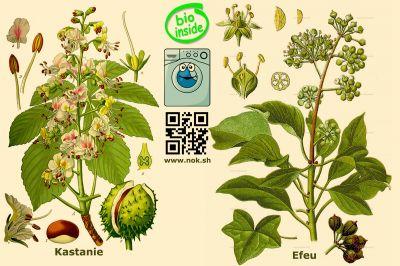 Biowaschmittel aus Kastanien